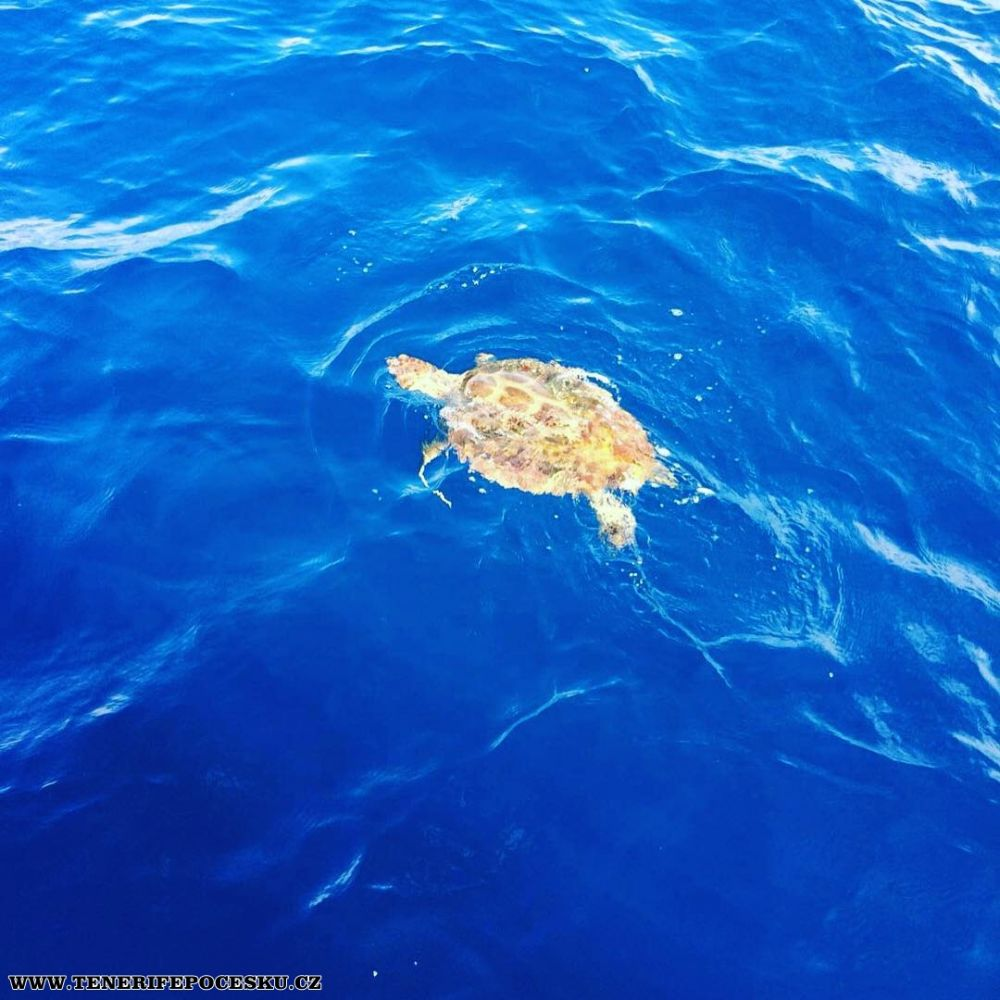 Potápění - šnorchlování s mořskými želvami
