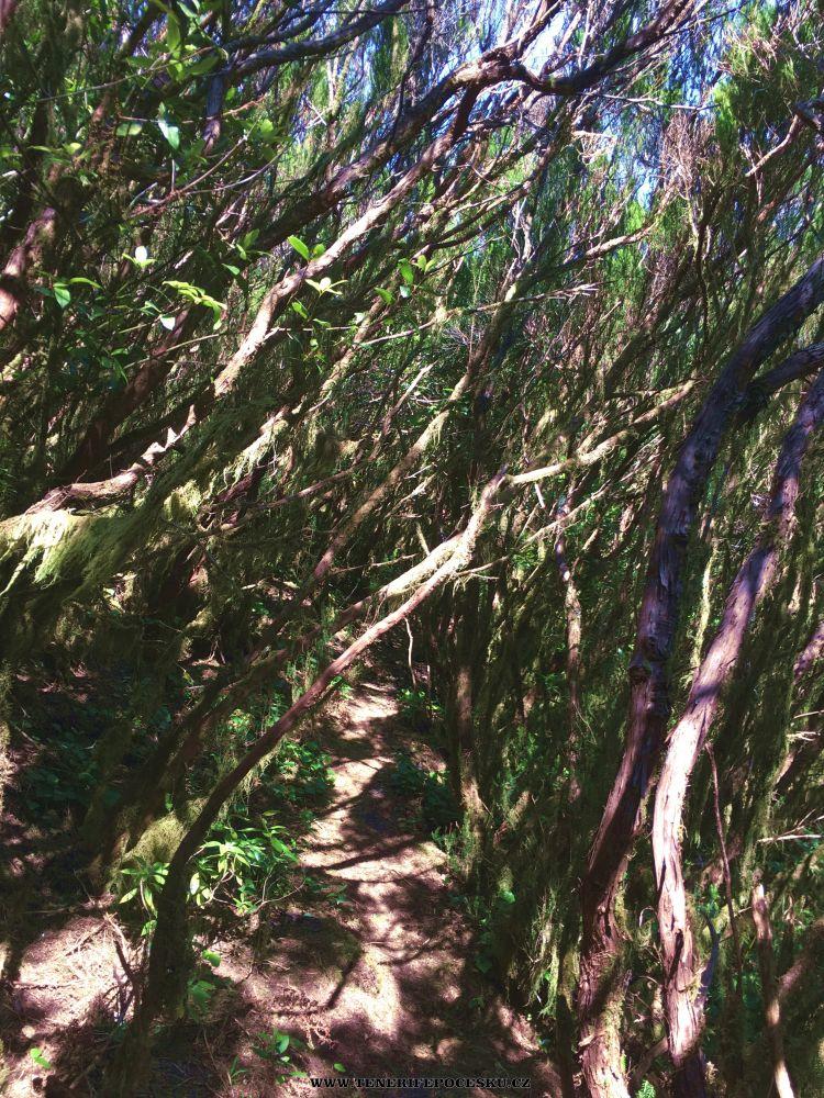 Výlet do pralesa