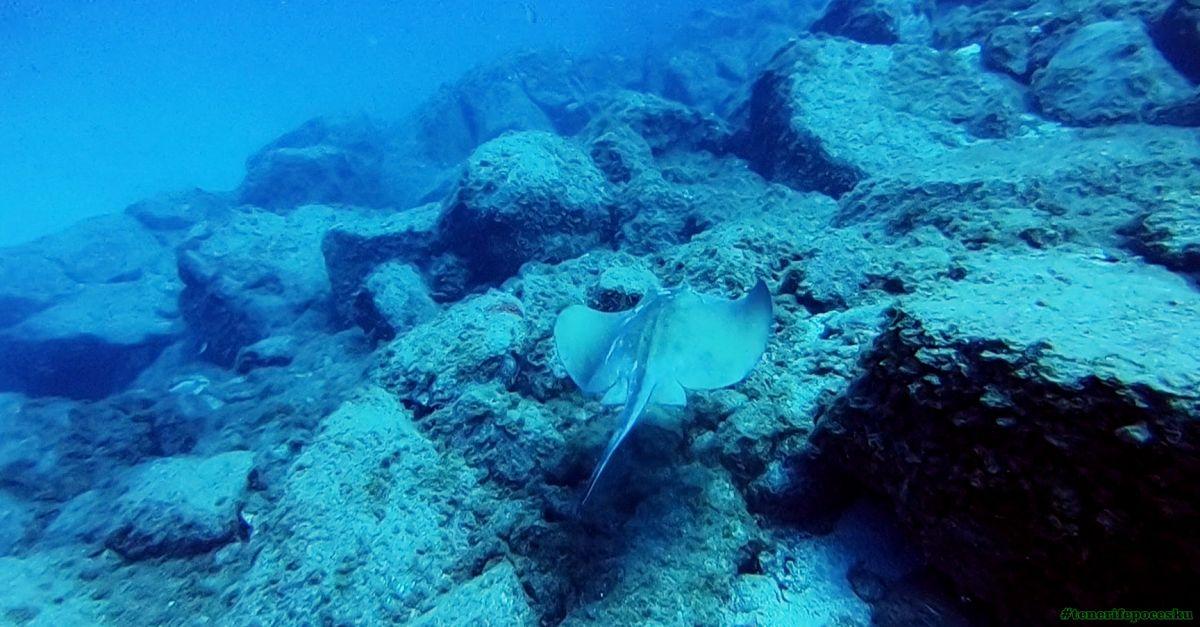 Potápění - první ponor